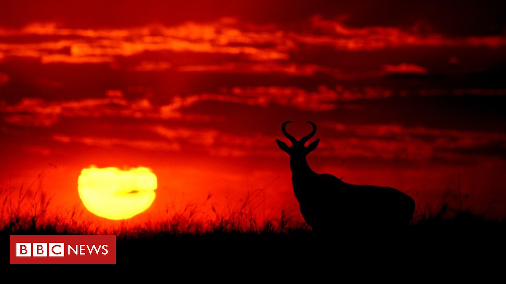 Stunning silhouettes show animals of Africa at sunrise and sunset - BBC News